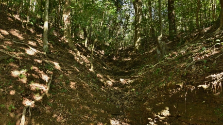 Views of moist Deciduous forest in the beginning of our Trek.