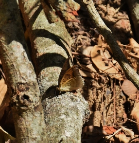 Another shot of a butterfly...