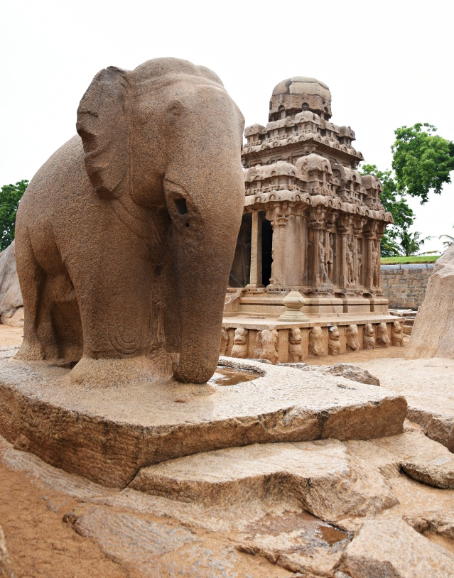 DSC_9222 - Large monolithic elephant relief on the west of Nakula-Sahadeva ratha, may be depicting Airavatha (Indra).