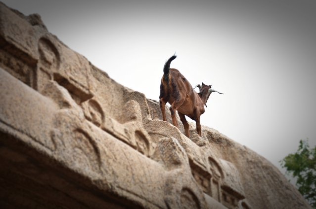 DSC_9538 - Crazy goat on the top of Varaha cave temple.