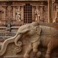 DSC_0381 – Elegantly carved Elephant found on the side walls of steps leading to the Mukhamandapa of Karthikeya shrine (NW).