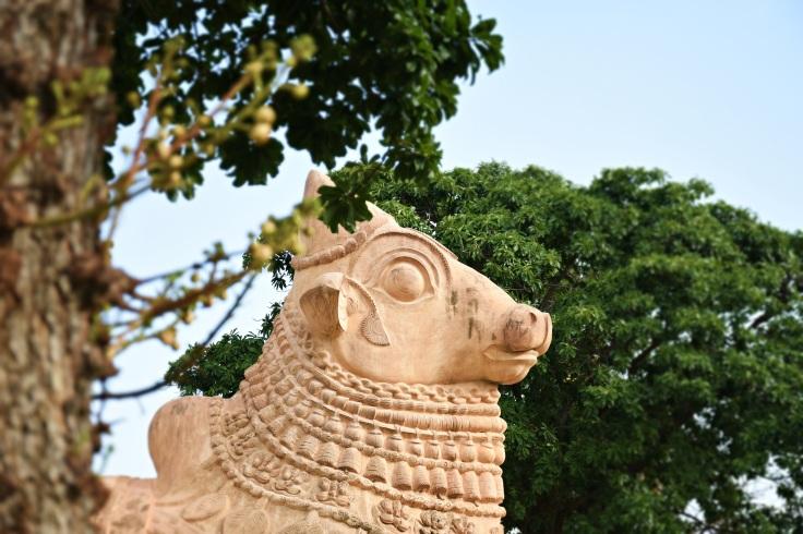 DSC_9875 - Nandi and the Nature - Gangaikondam.