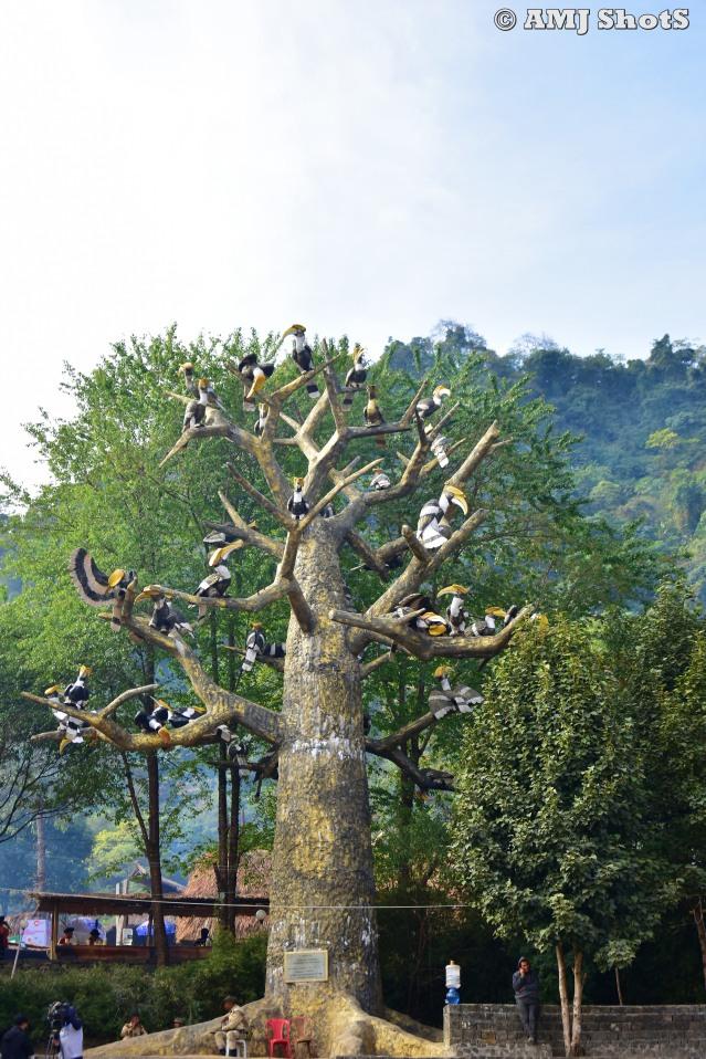 DSC_2951 Hornbill Tree.